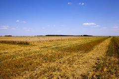 Agricoltura durante il raccolto Fotografia Stock Libera da Diritti