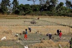 Agricoltura e agricoltori nel Myanmar Fotografia Stock Libera da Diritti