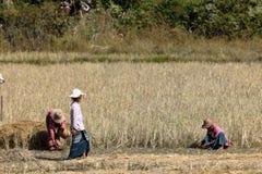 Agricoltura e agricoltori nel Myanmar Fotografie Stock Libere da Diritti