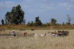 Agricoltura e agricoltori nel Myanmar Immagine Stock Libera da Diritti