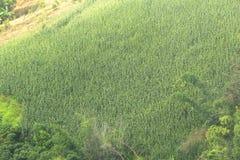 Agricoltura e alimento biologico crescente sulla montagna Fotografie Stock Libere da Diritti