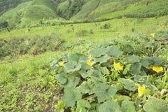 Agricoltura e alimento biologico crescente sulla montagna Fotografia Stock Libera da Diritti
