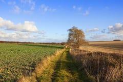 Agricoltura e bridleway Fotografia Stock Libera da Diritti