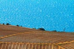 Agricoltura e cantina in Croazia, fondo della natura Immagine Stock Libera da Diritti