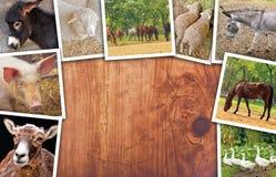 Agricoltura e collage del bestiame, foto con i vari animali Fotografie Stock
