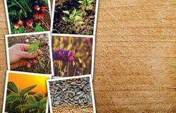 Agricoltura e coltivare il collage della foto Immagine Stock