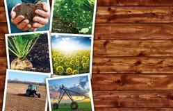 Agricoltura e coltivare il collage della foto Immagini Stock