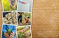 Agricoltura e coltivare il collage della foto Immagine Stock Libera da Diritti