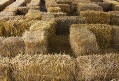 Agricoltura e fondo di azienda agricola, concetto del raccolto Immagini Stock