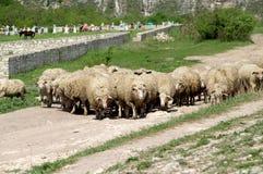 Agricoltura e la Moldavia di azienda agricola Fotografia Stock Libera da Diritti