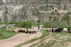 Agricoltura e la Moldavia di azienda agricola Fotografie Stock Libere da Diritti
