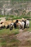Agricoltura e la Moldavia di azienda agricola Immagine Stock