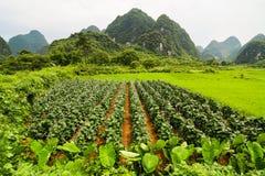 Agricoltura e montagne beaturiful di morfologia carsica Fotografie Stock