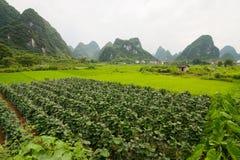 Agricoltura e montagne beaturiful di morfologia carsica Fotografie Stock Libere da Diritti