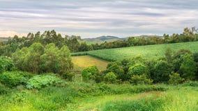 Agricoltura e natura sul pomeriggio di estate Immagine Stock