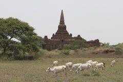 Agricoltura e pagoda Immagini Stock