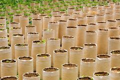 Agricoltura e piantagione Fotografia Stock Libera da Diritti