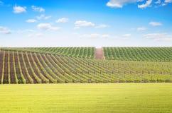 Agricoltura e prato della vigna Fotografie Stock Libere da Diritti