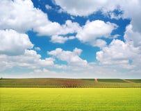 Agricoltura e prato della vigna Fotografia Stock Libera da Diritti