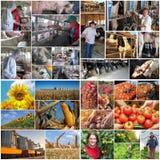 Agricoltura e produzione alimentare fotografia stock