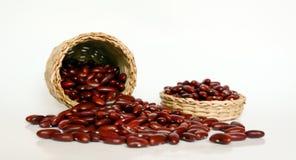 Agricoltura e seminare concetto crescente di punto del seme della pianta Fotografia Stock