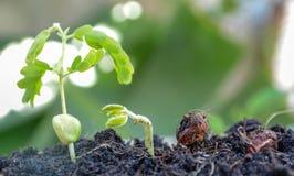 Agricoltura e seminare concetto crescente di punto del seme della pianta Fotografia Stock Libera da Diritti