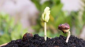 Agricoltura e seminare concetto crescente di punto del seme della pianta Fotografie Stock Libere da Diritti