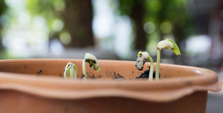 Agricoltura e seminare concetto crescente di punto del seme della pianta Immagini Stock