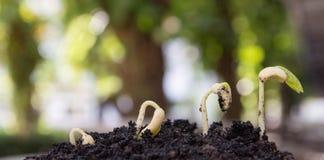 Agricoltura e seminare concetto crescente di punto del seme della pianta Immagini Stock Libere da Diritti