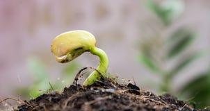 Agricoltura e seminare concetto crescente di punto del seme della pianta Immagine Stock Libera da Diritti