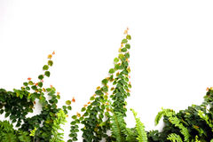 Agricoltura e seminare concetto crescente di punto del seme della pianta Fotografie Stock