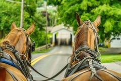 Agricoltura e tubi flessibili del campo dell'azienda agricola del paese di Amish a Lancaster, PA Fotografie Stock Libere da Diritti