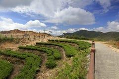 Agricoltura e turismo in associazione del giardino di tè Fotografie Stock Libere da Diritti