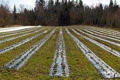 Agricoltura ecologica Fotografie Stock Libere da Diritti