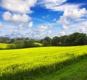 Agricoltura ecologica Immagine Stock Libera da Diritti