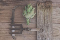 Agricoltura ecologica: Carciofo e vecchi strumenti di giardino Fotografie Stock Libere da Diritti