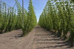 Agricoltura ed agricoltura del luppolo nell'Oregon Immagine Stock Libera da Diritti