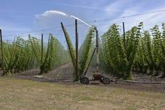 Agricoltura ed agricoltura del luppolo nell'Oregon Immagine Stock
