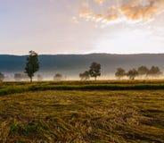 Agricoltura ed alba Fotografie Stock Libere da Diritti