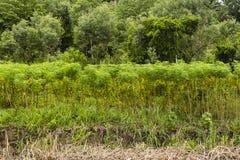Agricoltura ed alberi della piccola scala Fotografia Stock