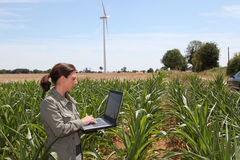 Agricoltura ed ambiente Fotografie Stock