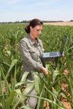 Agricoltura ed ambiente Fotografie Stock Libere da Diritti