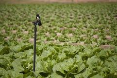 Agricoltura ed aziende agricole - uccello su uno spruzzatore Fotografia Stock