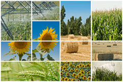 Agricoltura ed ecologia. Fotografia Stock