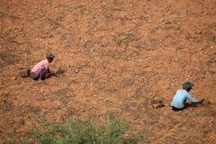 Agricoltura ed il raccolto nel Myanmar Fotografie Stock Libere da Diritti