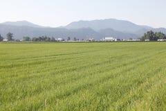 Agricoltura ed industria Fotografie Stock