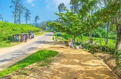Agricoltura in Ella immagine stock libera da diritti