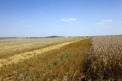 agricoltura estate del raccolto Fotografia Stock