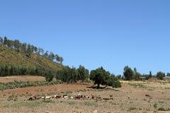 Agricoltura in Etiopia Immagini Stock