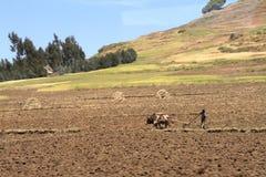 Agricoltura in Etiopia Fotografia Stock